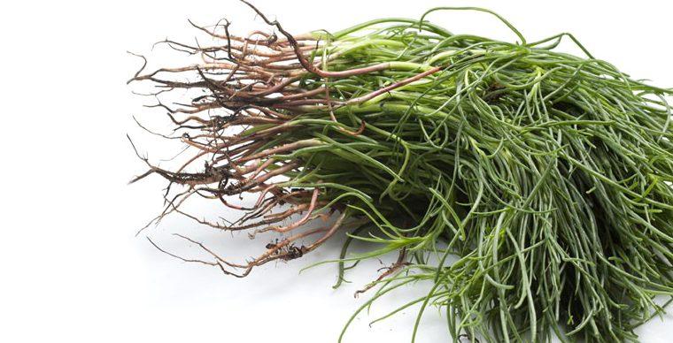 Tre ricette veloci e sfiziose preparate con i lischi, la pianta dai tanti nomi